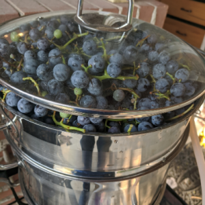 The glass lid on top of the grapes in the steam juicer